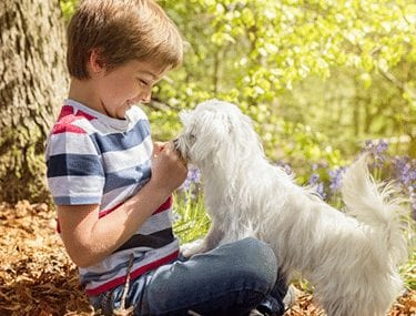 Veterinarian in Germantown, MD: Boy Playing With Puppy